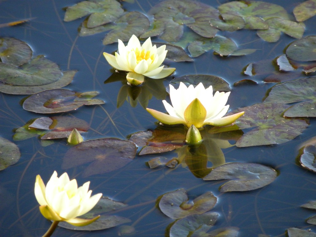 Try a miniature water lily in a container garden spaces water adds magic and life to a garden unfortunatelymany people think adding water is beyond their abilitywater features neednt be large or involved izmirmasajfo